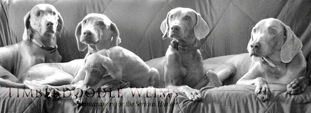 www.timberdoodleweims.net - Breeding Goals