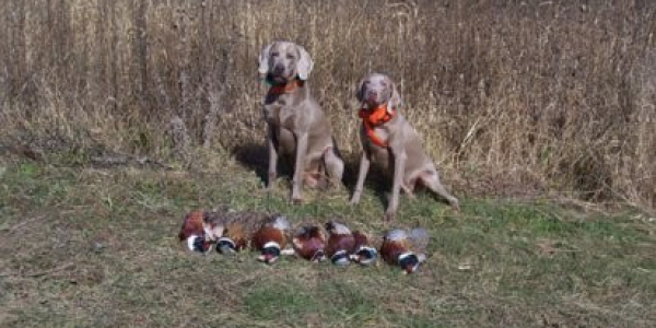 www.timberdoodleweims.net – Gallery – Hunting – 120